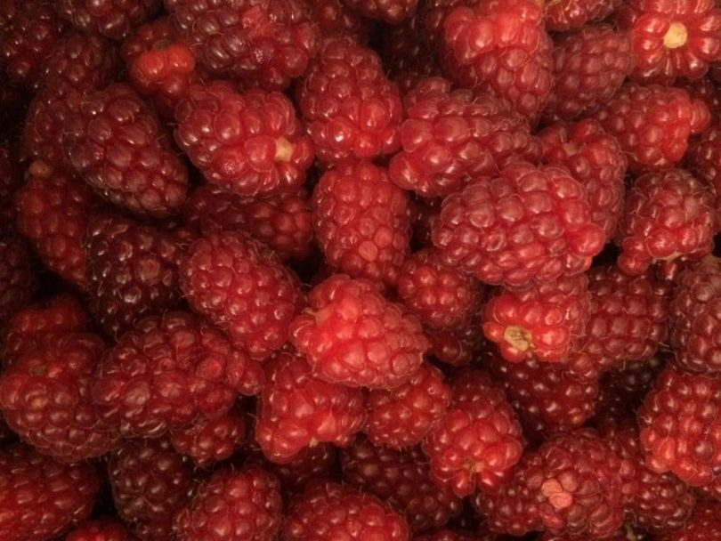 tayberries for tayberry extra jam
