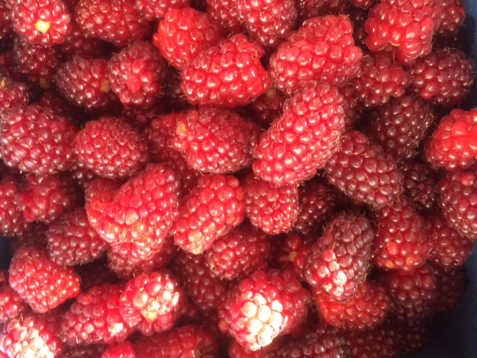 tummelberries 2